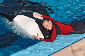 SeaWorld trainer Dawn Brancheau